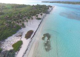 Herbier marin - Réserve naturelle de Petite Terre