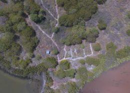 Layon de replantation des gaïacs - Réserve naturelle de Petite Terre
