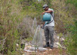 Suivi sanitaire des gaïacs replantés - Réserve naturelle de Petite Terre