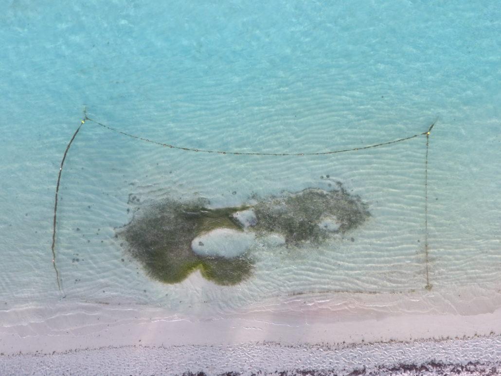 herbier à phanérogames marines